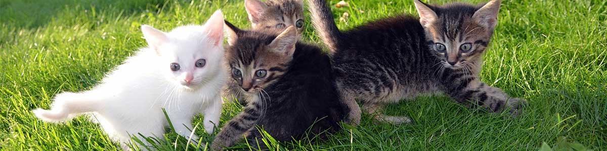 gatti che rimangono piccoli