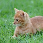 icona gatti piccoli