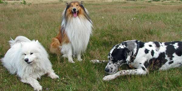 razze cani grandi