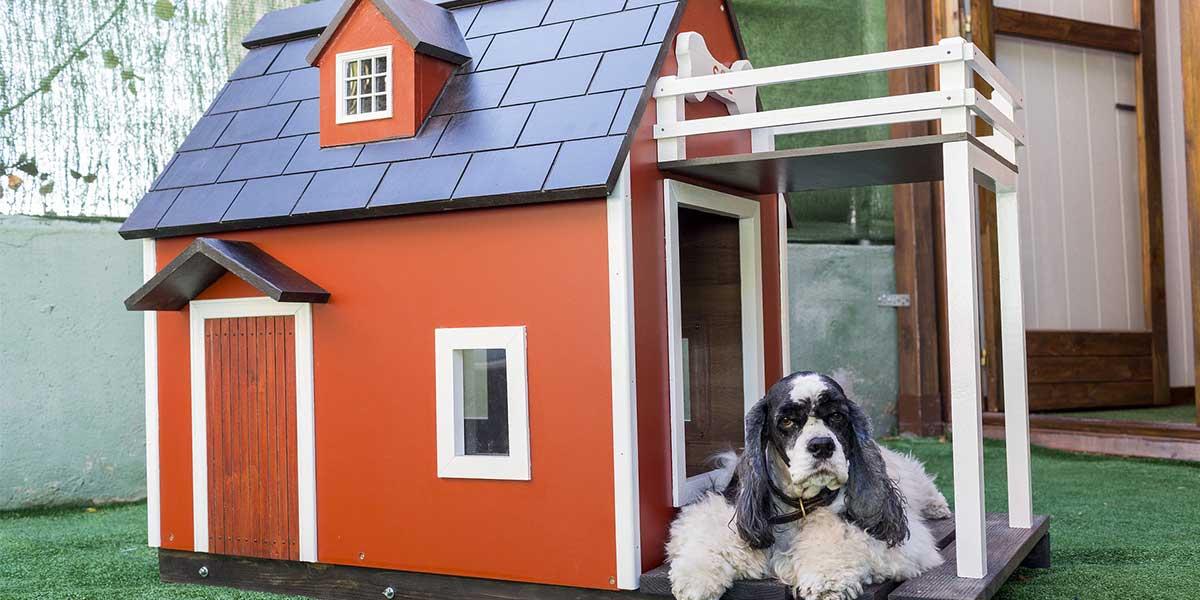 cuccia per cani esterno