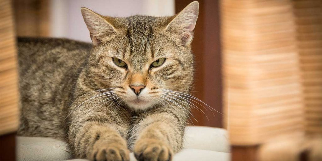 quanto vivono i gatti