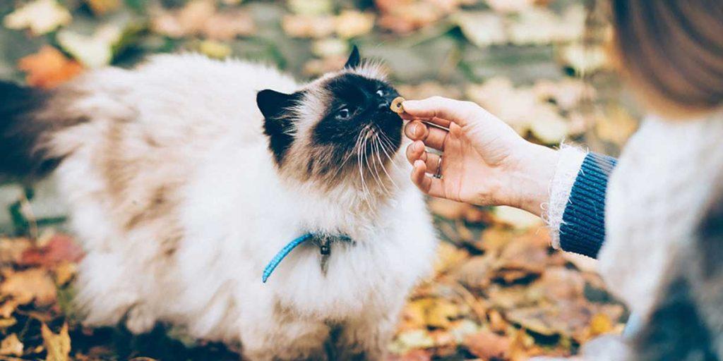 crocchette per gatti sterilizzati