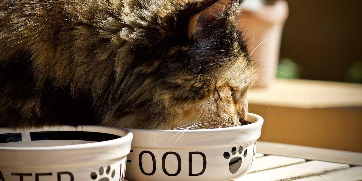 migliori crocchette per gatti