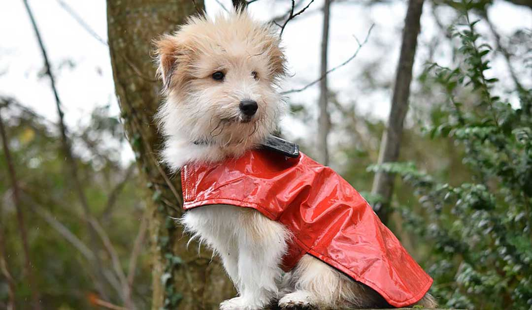 cappottini impermeabili per cani