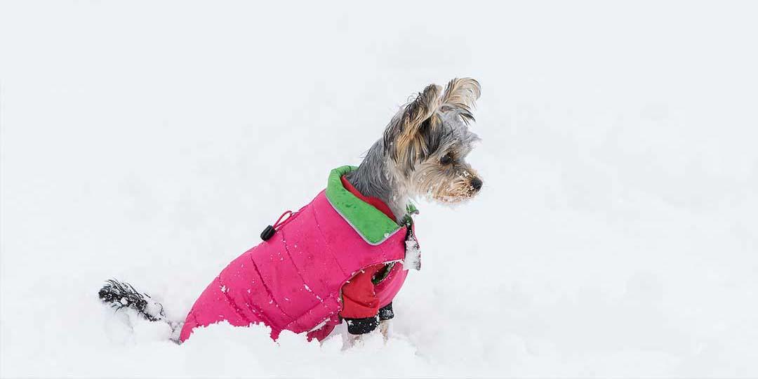 cappottini per cani taglia piccola