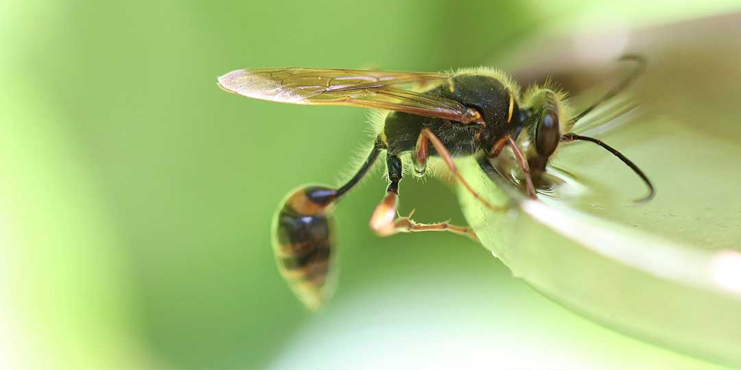 come allontanare le vespe