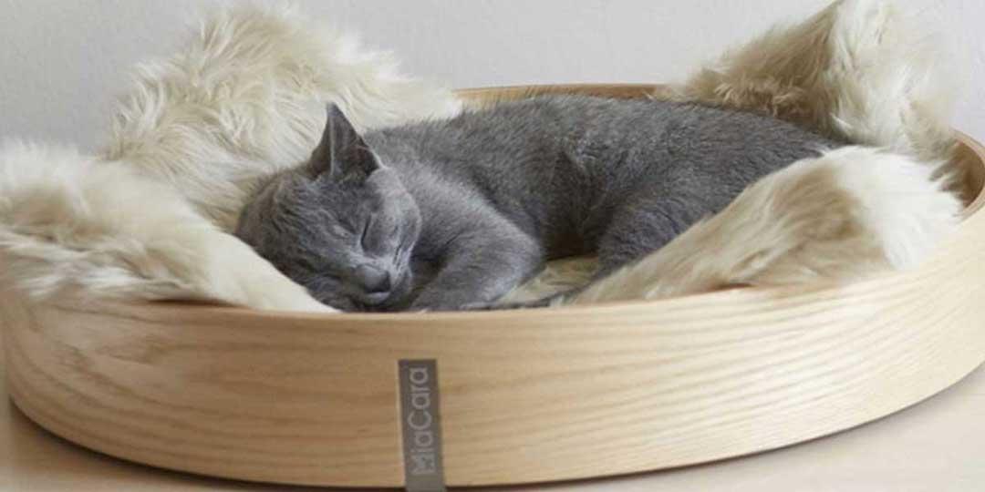 cuccia per gatti interno