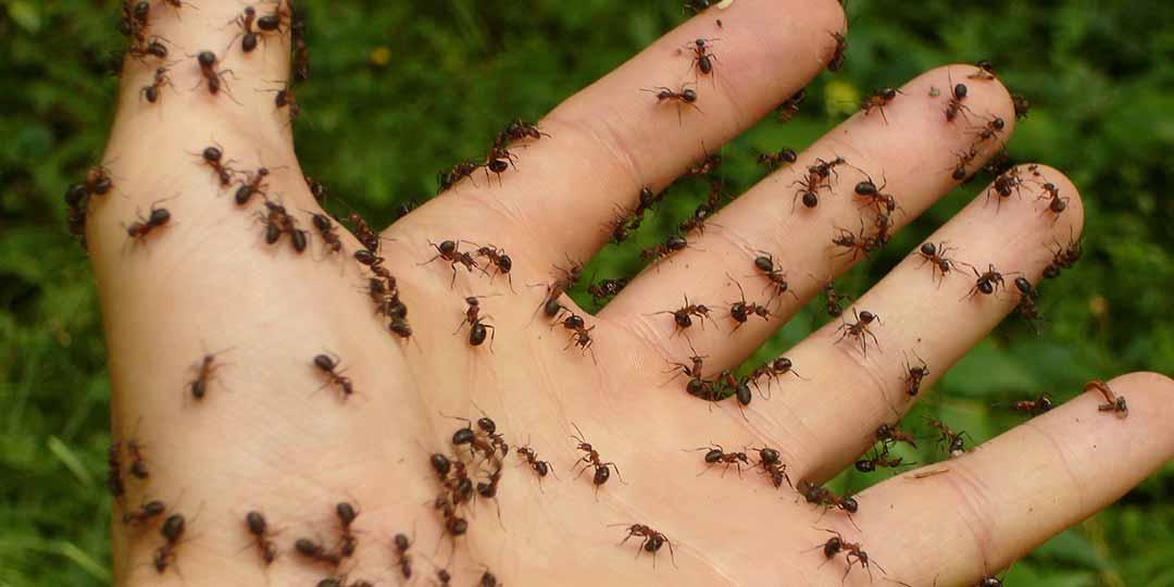 eliminare le formiche