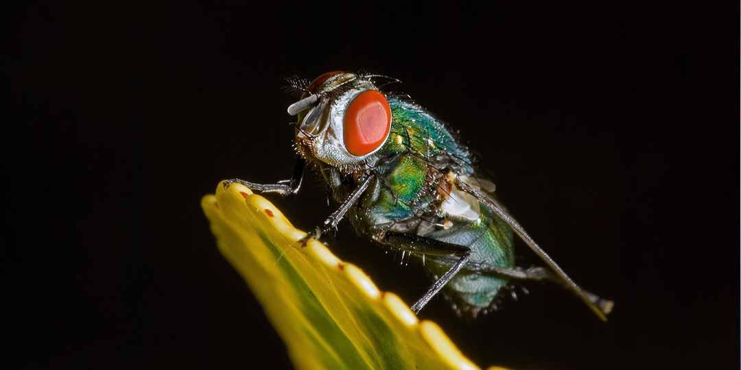 eliminare le mosche