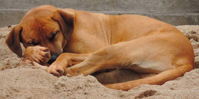 sognare cani