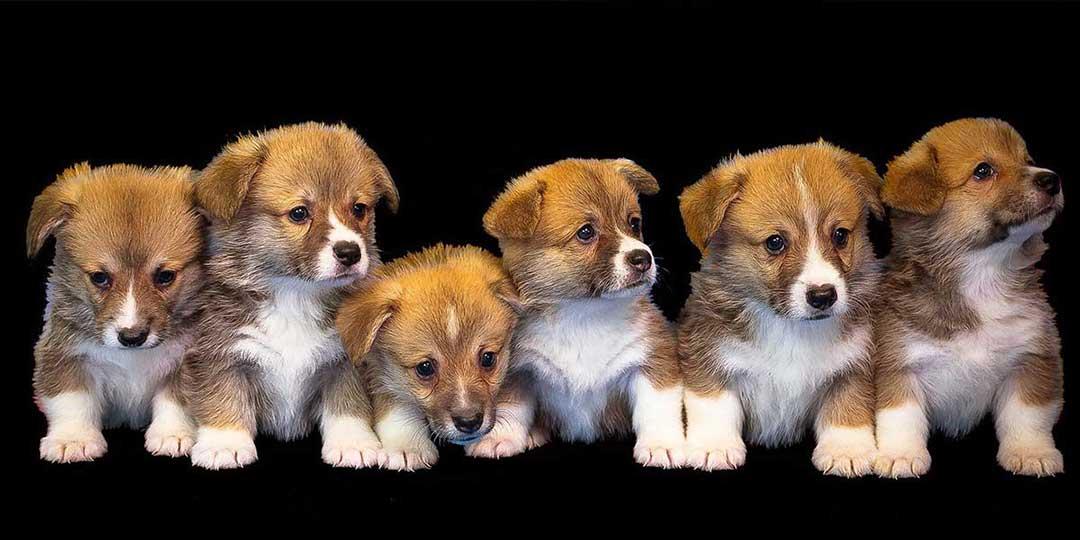 sognare cuccioli di cane