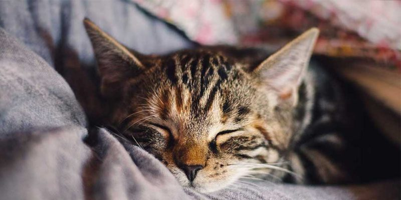 sognare gatti
