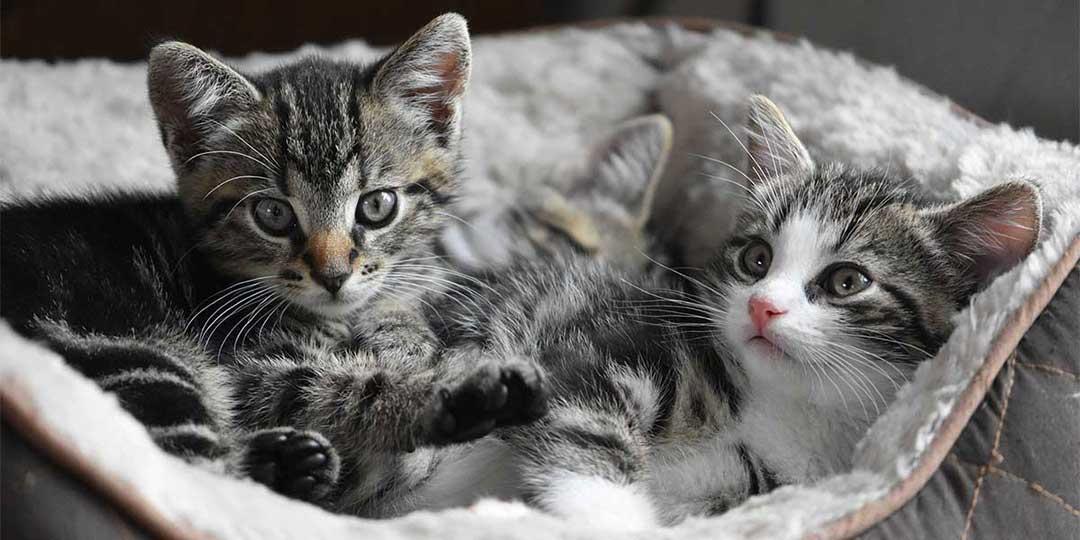 sognare gattini