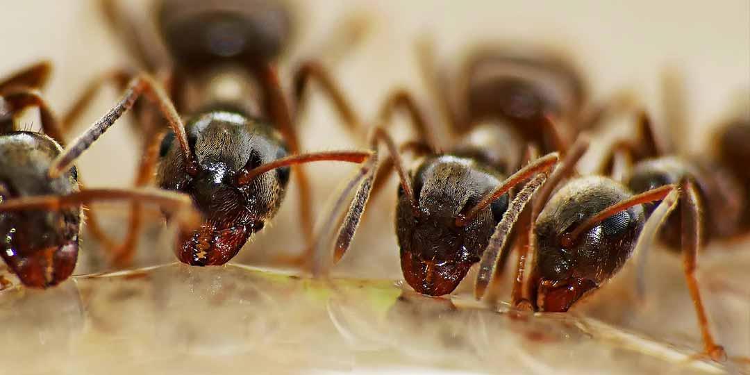 trappole per formiche