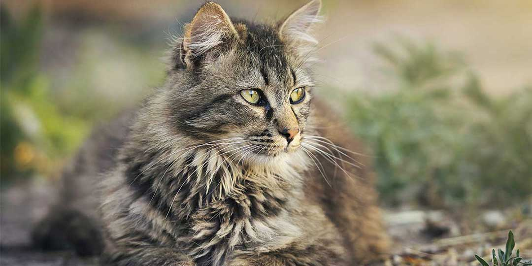 vita media gatti